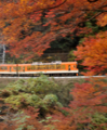 「京都新聞写真コンテスト」 紅葉の車窓