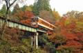 「京都新聞写真コンテスト」 紅葉を行くきらら