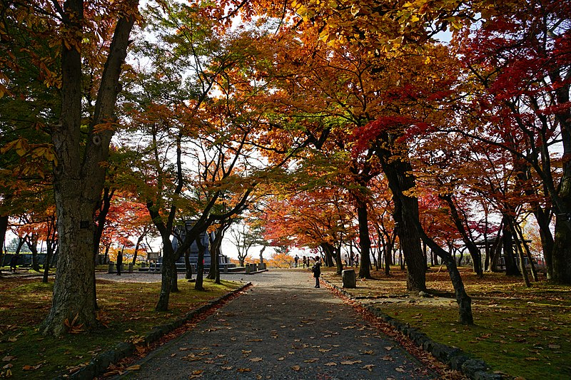 f:id:kouji-katayanagi:20181127175740j:plain