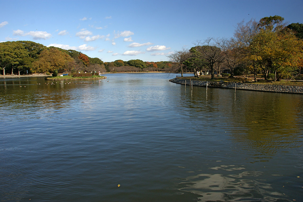 f:id:kouji-katayanagi:20190304032528j:plain