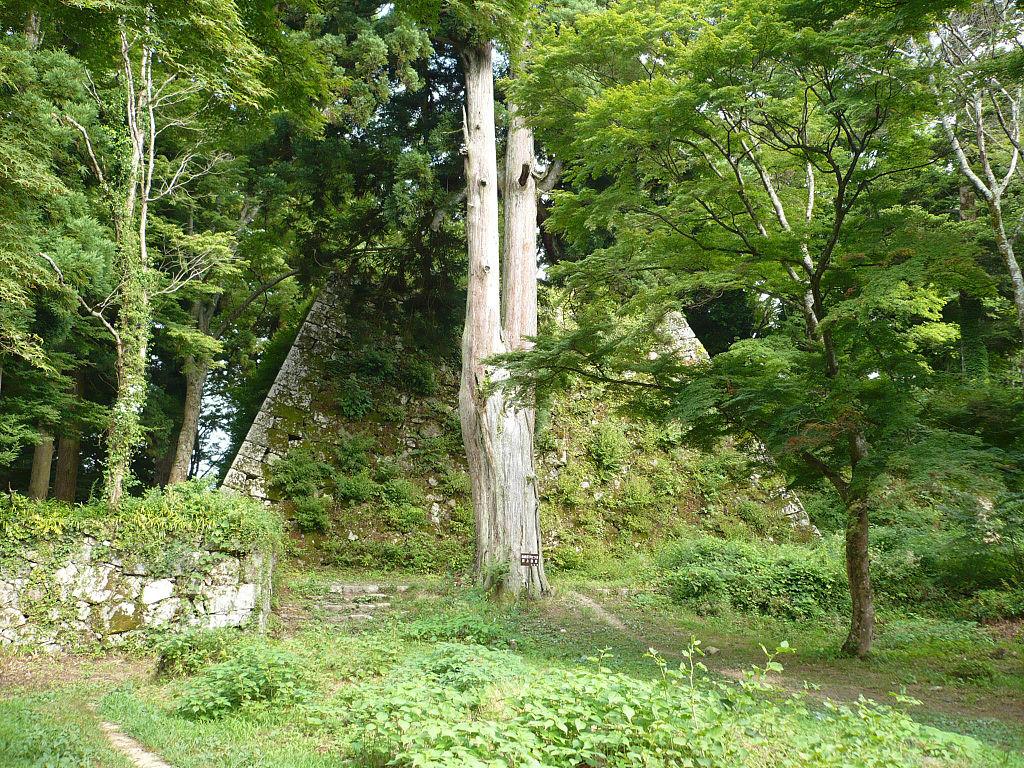 f:id:kouji-katayanagi:20190310231546j:plain