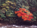 京都新聞写真コンテスト 川辺の彩り