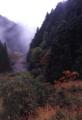京都新聞写真コンテスト 秋の訪れ