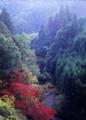 京都新聞写真コンテスト 山峡の秋