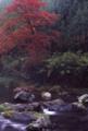 京都新聞写真コンテスト 秋渓