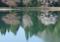 京都新聞写真コンテスト 池のほとり