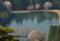 京都新聞写真コンテスト 春の池畔