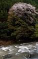 京都新聞写真コンテスト 春の渓流