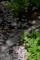 京都新聞写真コンテスト 惜春の流れ