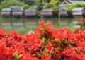 京都新聞写真コンテスト 池をふちどる