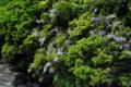 京都新聞写真コンテスト 初夏に咲く