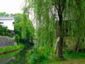 京都新聞写真コンテスト 若葉の頃