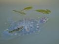 京都新聞写真コンテスト 初夏の水面