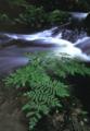 京都新聞写真コンテスト 浅緑の流れ