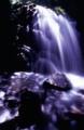 京都新聞写真コンテスト 天然のクーラー