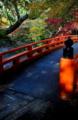 京都新聞写真コンテスト 秋への入り口