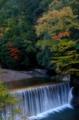 京都新聞写真コンテスト 秋の流れ
