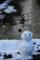 京都新聞写真コンテスト 川辺の雪だるま