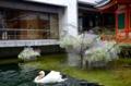 京都新聞写真コンテスト 水面で遊ぶ