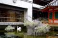 京都新聞写真コンテスト 彩りを添えて