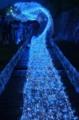 京都新聞写真コンテスト 光の天の川