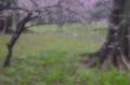 京都新聞写真コンテスト 雨に濡れる梅林