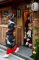京都新聞写真コンテスト 新春の華やぎ