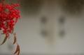 京都新聞写真コンテスト 赤い実