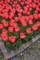 京都新聞写真コンテスト 花の園