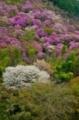 京都新聞写真コンテスト 春のささやき