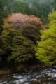 京都新聞写真コンテスト 春の終わり