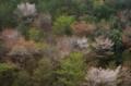 京都新聞写真コンテスト 春のざわめき