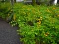 京都新聞写真コンテスト 黄金色の春