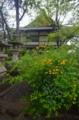 京都新聞写真コンテスト 春色の境内