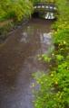 京都新聞写真コンテスト 水辺の春
