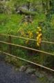 京都新聞写真コンテスト 新緑の境内