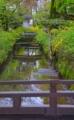 京都新聞写真コンテスト 小川を彩る