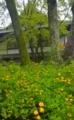 京都新聞写真コンテスト 黄金色の輝き