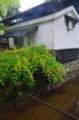 京都新聞写真コンテスト 川辺に咲く