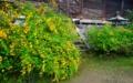 京都新聞写真コンテスト 黄金色の空間