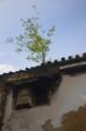 京都新聞写真コンテスト 芽吹き