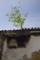 京都新聞写真コンテスト 屋根から青葉