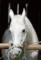 京都新聞写真コンテスト 神馬」