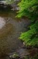 京都新聞写真コンテスト 青葉の渓流