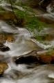 京都新聞写真コンテスト 青葉の流れ