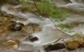 京都新聞写真コンテスト 清らかな渓