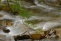 京都新聞写真コンテスト 渓流の風情