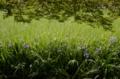 京都新聞写真コンテスト 緑の空間