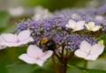 京都新聞写真コンテスト 花粉を求めて