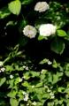 京都新聞写真コンテスト 朝光を浴びて